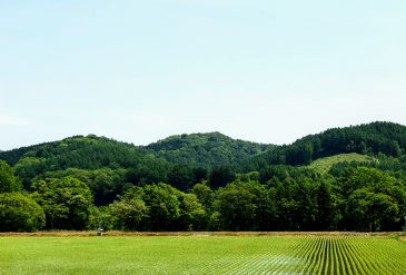 本日、京都 伏見稲荷大社では田植祭